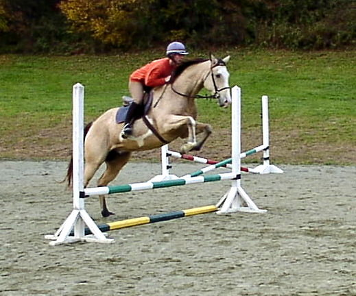 horse fence manufacturer and post and rail